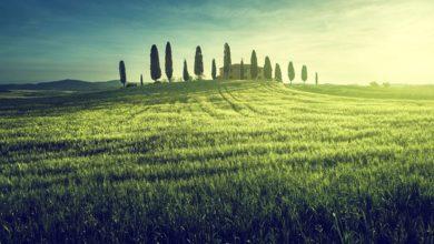 Pozemkový servis – Kompletní podpůrné služby